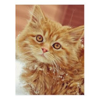Kitten in Snow Postcard