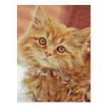 Kitten in Snow Postcards