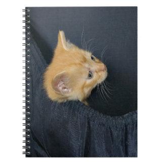 Kitten in suitcase notebooks
