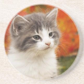 Kitten In The Fall Drink Coaster