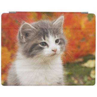 Kitten In The Fall iPad Cover