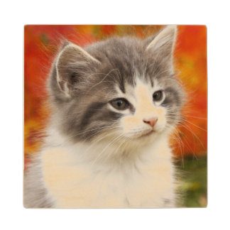 Kitten In The Fall Wood Coaster