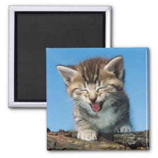Kitten In Tree Square Magnet