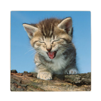 Kitten In Tree Wood Coaster
