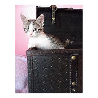 kitten in trunk postcard