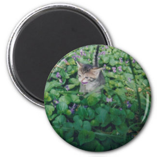 Kitten in Violets magnet