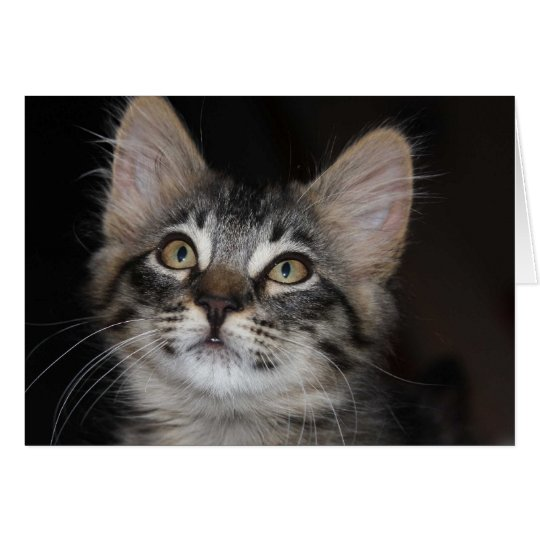 Kitten Innocence Anniversary Card