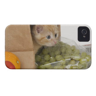 Kitten inside grocery bag iPhone 4 Case-Mate case
