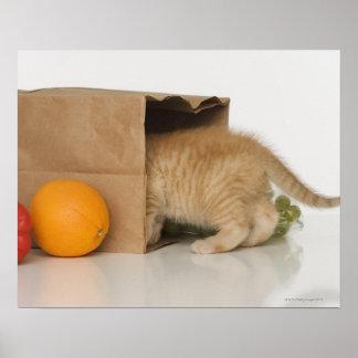 Kitten inside grocery bag posters