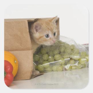 Kitten inside grocery bag square sticker