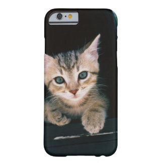 Kitten inside of mailbox barely there iPhone 6 case