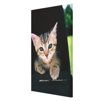 Kitten inside of mailbox canvas print