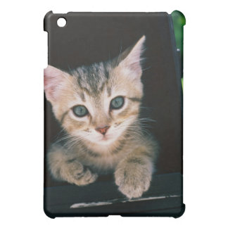 Kitten inside of mailbox iPad mini covers