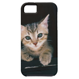 Kitten inside of mailbox iPhone 5 covers