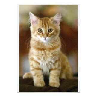 Kitten Invite