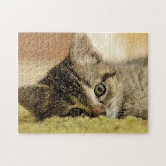 kitten jigsaw jigsaw puzzle