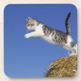 Kitten Jumping 2 Coaster