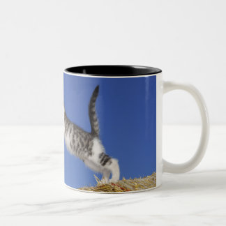 Kitten Jumping 2 Two-Tone Coffee Mug