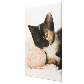 Kitten laying on ball of string canvas print