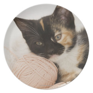 Kitten laying on ball of string plate