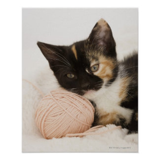 Kitten laying on ball of string poster
