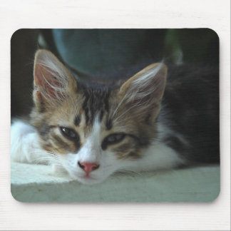 Kitten - Lazy Afternoon Mouse Pads