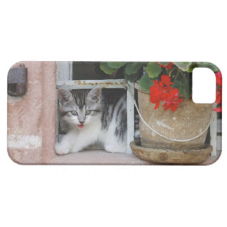 Kitten Looking Out Window Barely There iPhone 5 Case