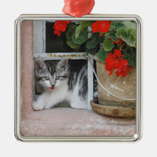 Kitten Looking Out Window Christmas Ornament