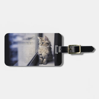 Kitten Looking Out Window Luggage Tag