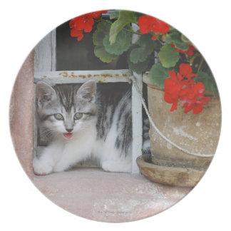 Kitten Looking Out Window Plate