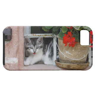 Kitten Looking Out Window Tough iPhone 5 Case
