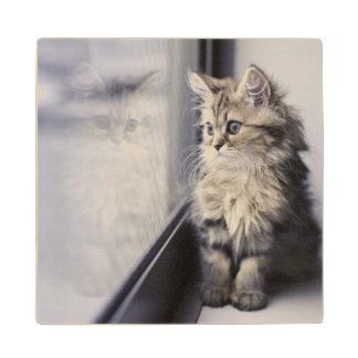 Kitten Looking Out Window Wood Coaster