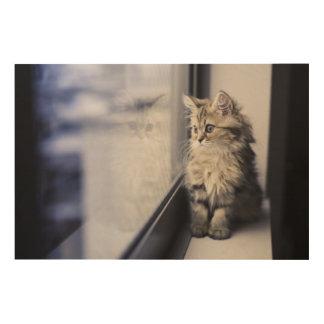 Kitten Looking Out Window Wood Print