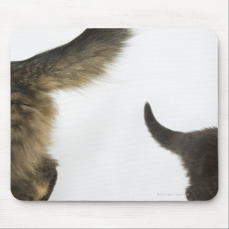 Kitten Looking up at its Mother's Tail Mouse Mat