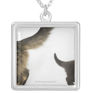 Kitten Looking up at its Mother's Tail Silver Plated Necklace