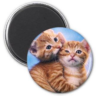 Kitten Love Fridge Magnet