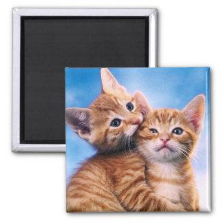 Kitten Love Square Magnet