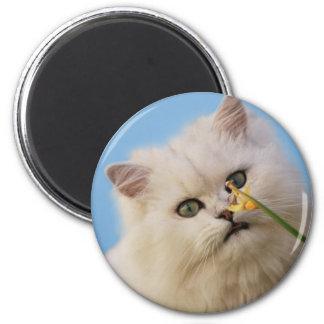 Kitten loving the daffodil 6 cm round magnet