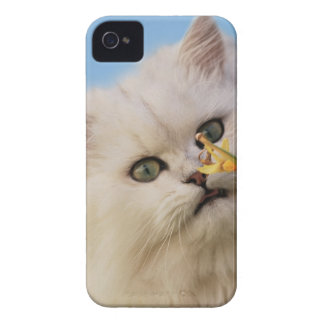 Kitten loving the daffodil iPhone 4 covers