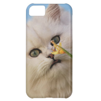 Kitten loving the daffodil iPhone 5C cases