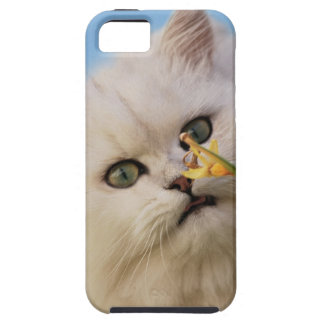 Kitten loving the daffodil iPhone 5 case