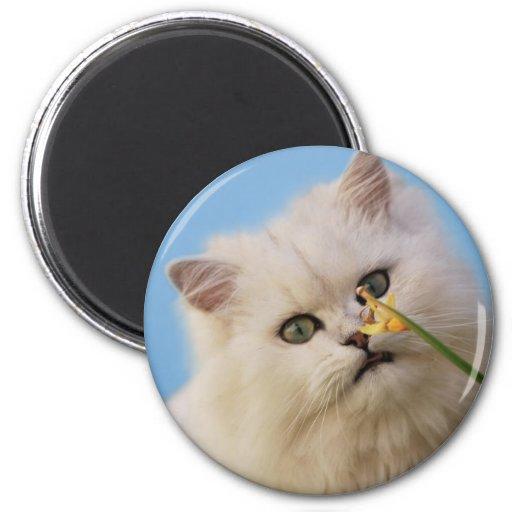 Kitten loving the daffodil fridge magnets