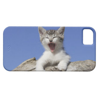 Kitten lying on log, yawning, close-up iPhone 5 cover