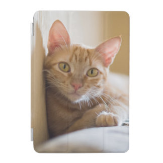 Kitten Lying On The Couch iPad Mini Cover