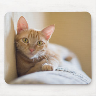 Kitten Lying On The Couch Mouse Mat