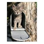 Kitten mail postcard