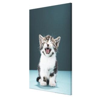 Kitten meowing canvas print