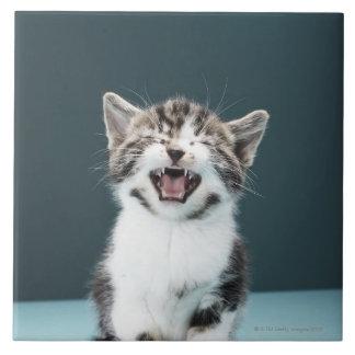 Kitten meowing tile