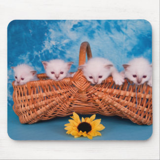kitten mouse pads