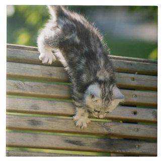 Kitten moving down on bench tile